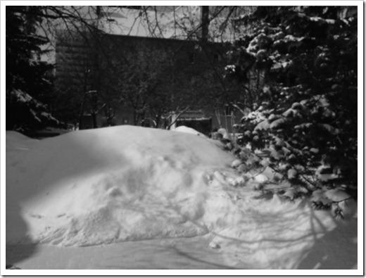 Snowy site in Edmonton